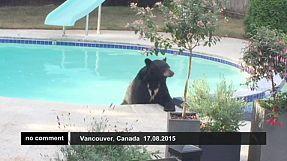 Urso relaxa na piscina