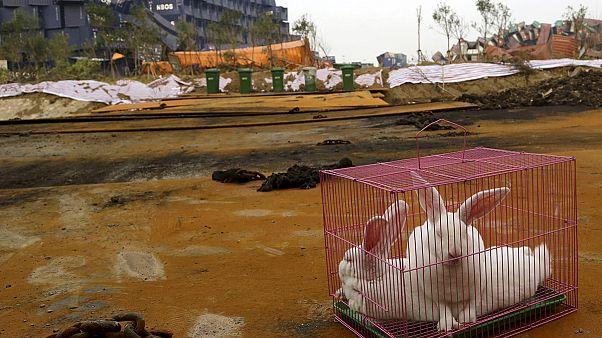 Explosion in China: Hasen überleben Chemieversuche