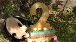 Bao Bao's birthday bash