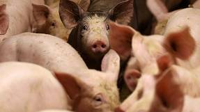 EU Agriculture Council called over falling milk and pork prices