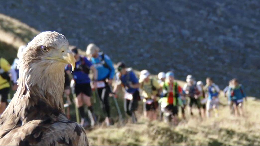 Vom Aussterben bedrohte Adler filmen Ultra-Trail am Mont-Blanc