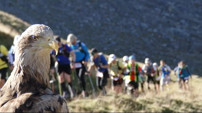 L'Ultra Trail du Mont Blanc filmé par... le plus grand aigle d'Europe