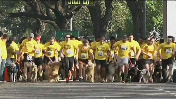 Τρέχοντας παρέα με κατοικίδια