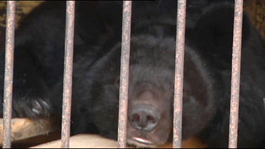 Cheias deixam animais encurralados num zoo no leste da Rússia