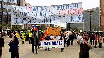 Bruxelas: Produtores de leite e agricultores protestam em dia de reunião de ministros do setor