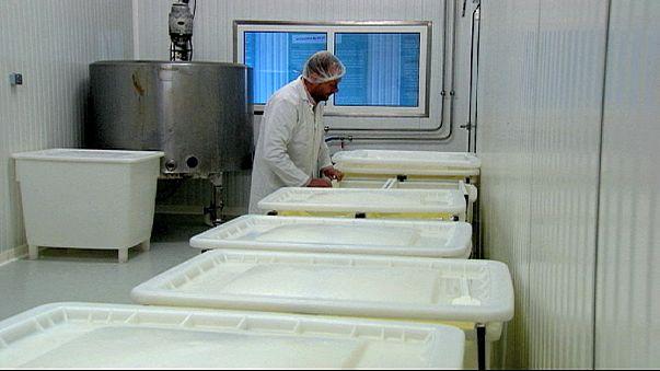 Comment la crise du lait frappe les petites exploitations?