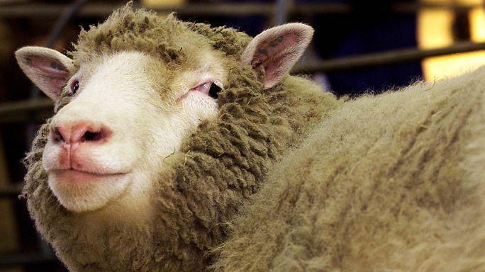 AP klonlanmış hayvan eti istemiyor
