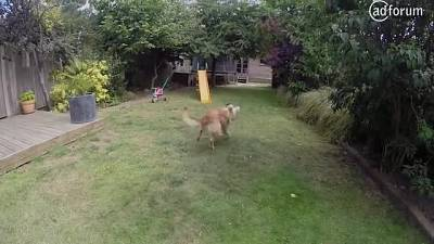 Amazing Dog (British Heart Foundation)