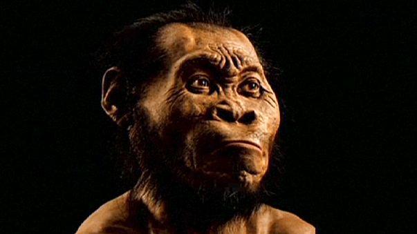 """Afrique du Sud : """"Homo naledi"""", ce cousin lointain qui sort soudain de sa grotte"""