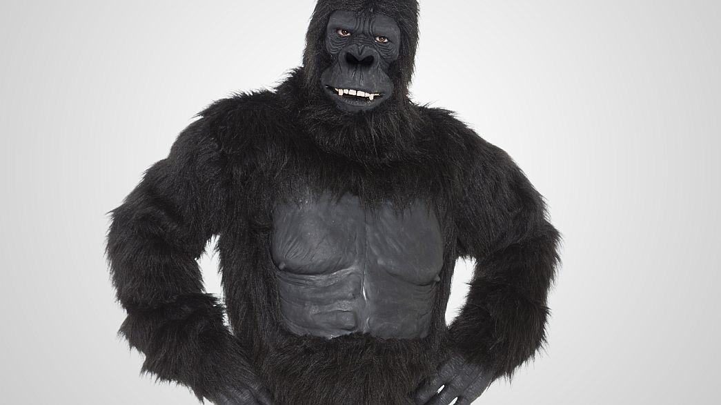 Gorilla on White