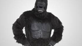 Gorilla on White