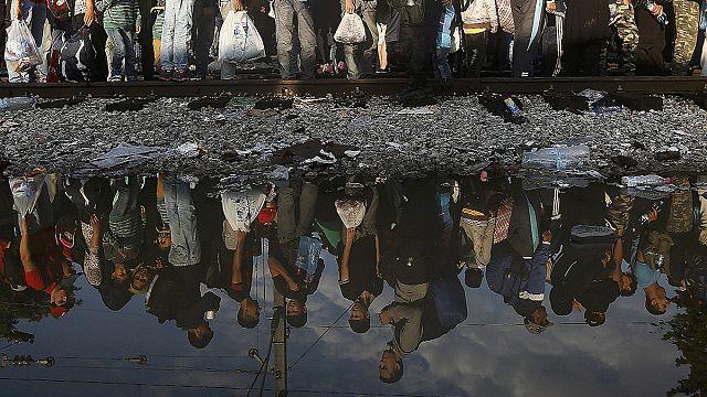 Миграционный кризис: как отделить зерна от плевел?