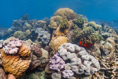 Healthy coral off Lizard Island in the Great Barrier Reef.