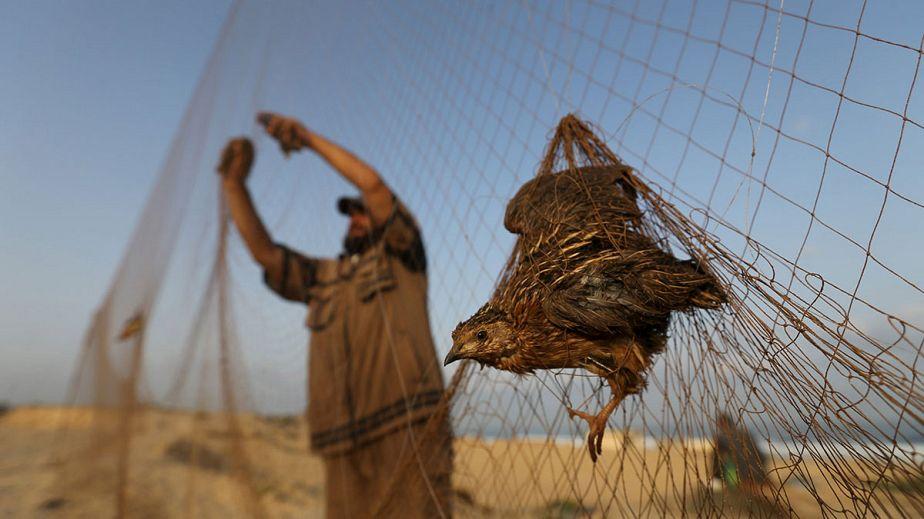 Des oiseaux migrateurs piégés sur la bande de Gaza
