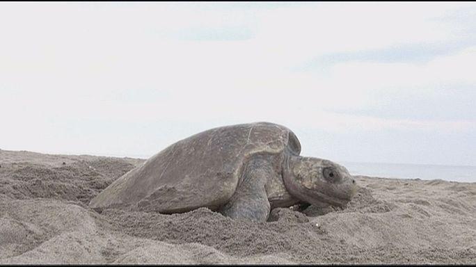 Kaplumbağa avcılarına karşı insansız hava araçları