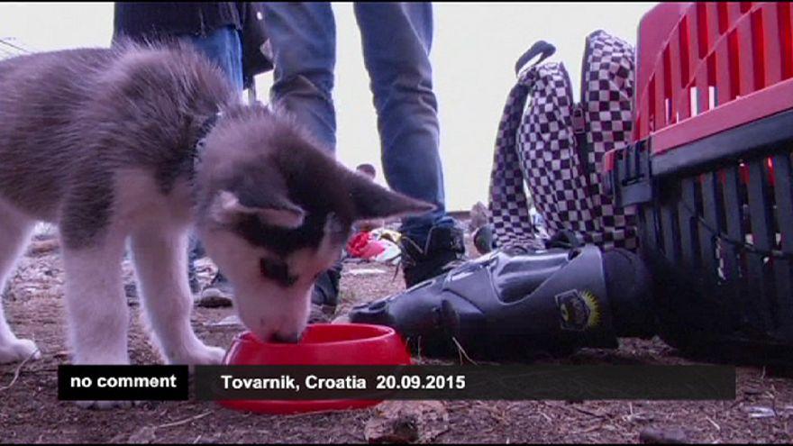Refugiado sirio con su perrito cruzando el Mediterráneo