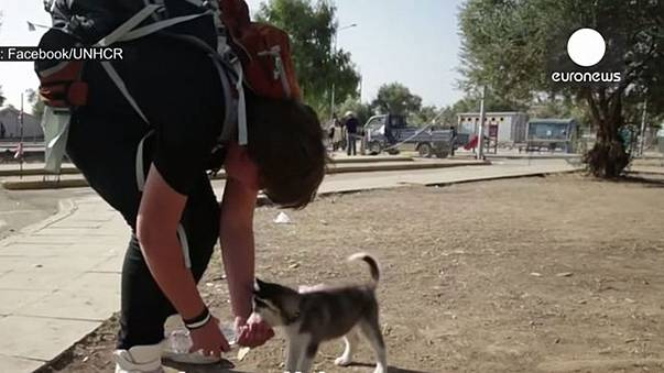 One boy and his dog: a refugee's tale