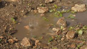 Do you know: how does soil clean water?