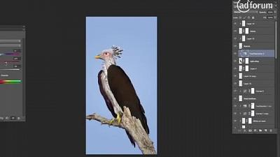 Tuluver (BirdLife)