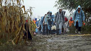 Migrants cross the border between Serbia into Croatia