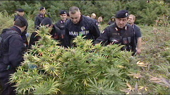 """الشرطة الإيطالية تقتلع """"غابة"""" من الماريجوانا"""