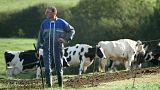 Minden másnap öngyilkos lesz egy francia gazda