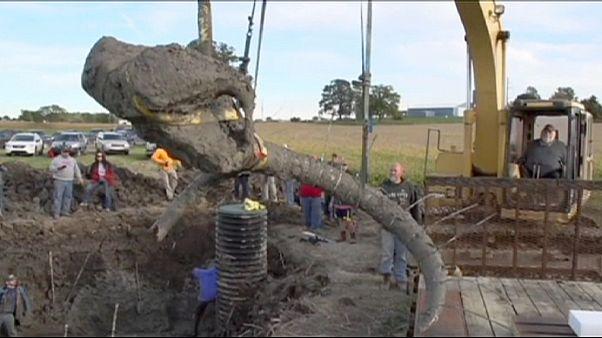 Gyapjas mamut csontvázára bukkantak farmerek