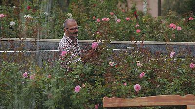 Le nom des roses