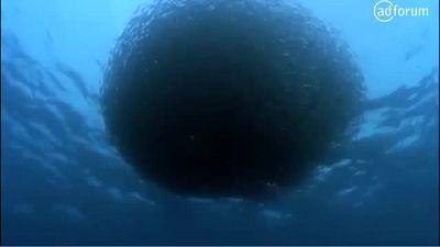 The Ocean (30 sec) (Conservation International)