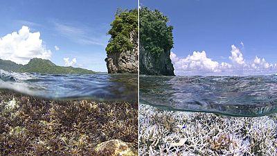 Le corail blanchit, un signal d'alarme pour la planète