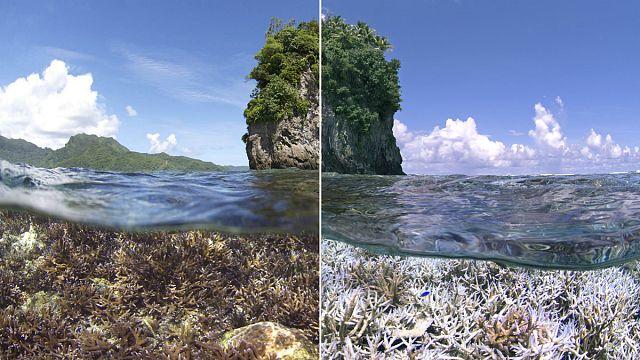 Обесцвечивание кораллов: глобальная проблема