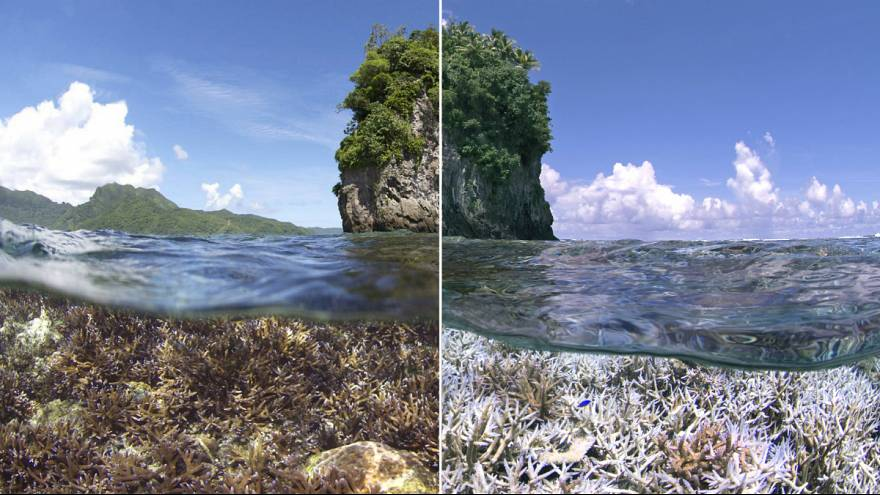 World's corals being 'bleached by global warming'