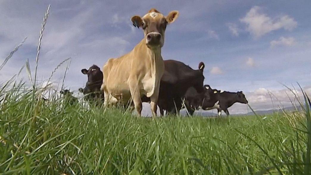 Agricultores australianos testam sensor ótico para medir qualidade do pasto
