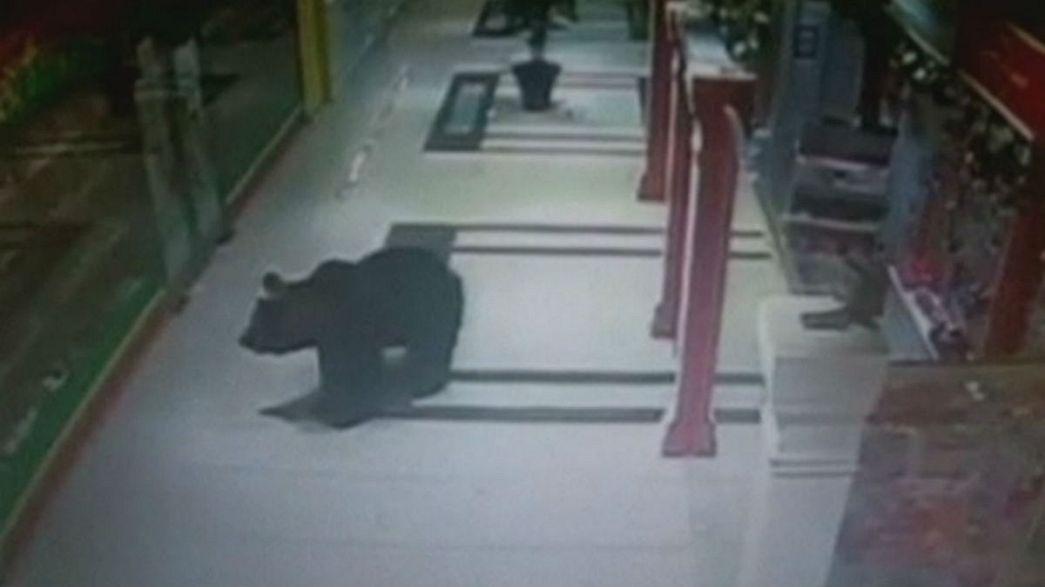 Russland: Braunbär verirrt sich in Einkaufszentrum