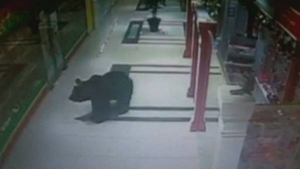 Brown bear shot in shopping mall in eastern Russia