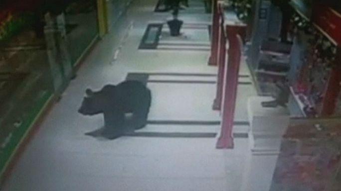 Un ours abattu dans une école en Russie