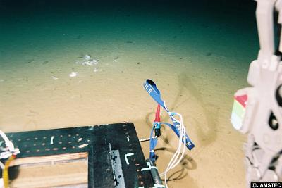 A deep-sea probe captures a picture of plastic bags in the Mariana Trench on May 20, 1998.