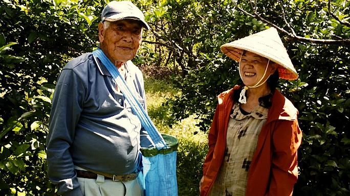 Keeping alive Okinawa's  tasty secrets of longevity