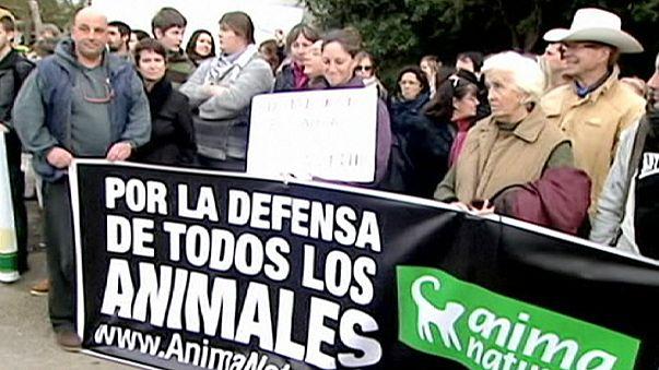 Испания: 8 месяцев тюрьмы за убийство лошади