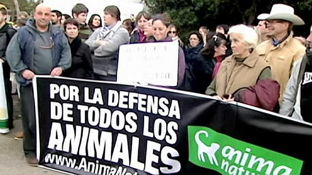 Man faces prison in Spain for battering his horse to death