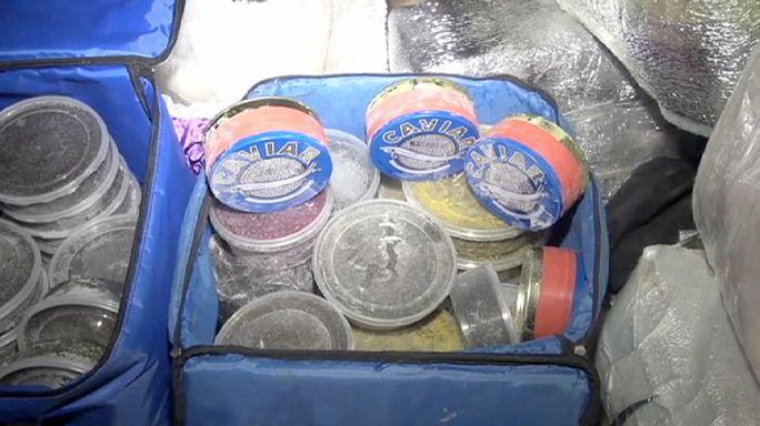 Russie : un corbillard arrêté pour excès de vitesse transportait du caviar de contrebande