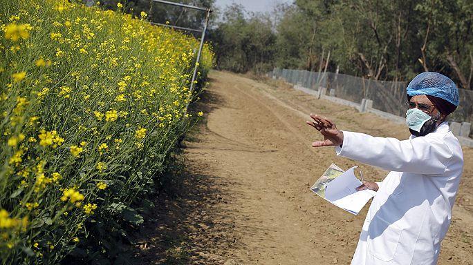 Европарламент отверг меры против распространения ГМО