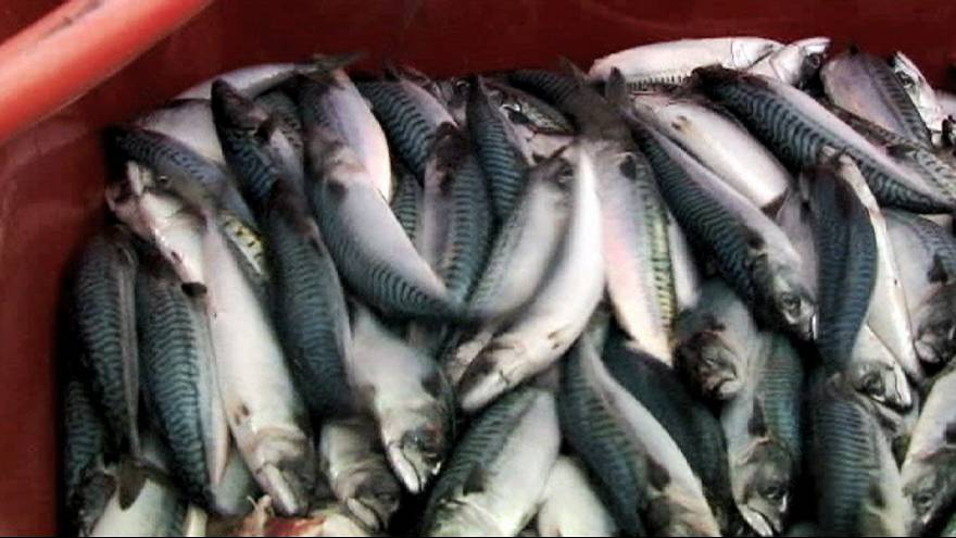 EU institution eateries and sushi restaurants among those guilty of fish fraud in Brussels