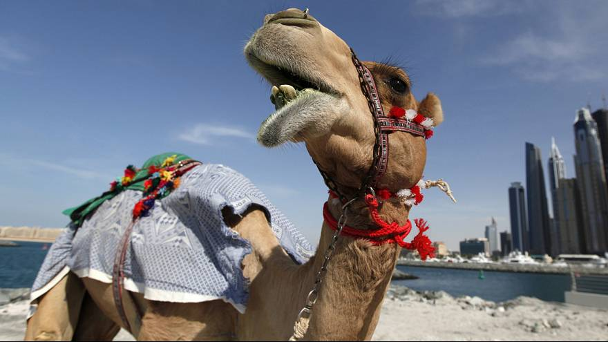 Safe, but a turn-off for camels: fun facts on air travel