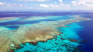 Image: The Great Barrier Reef experiences a catastrophic die-off following
