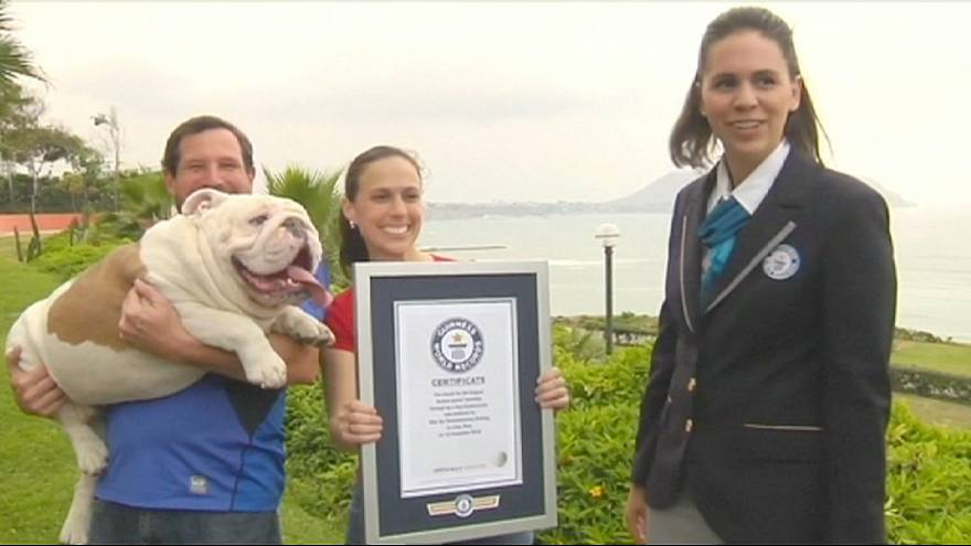 Bulldog breaks skateboarding Guinness World Record