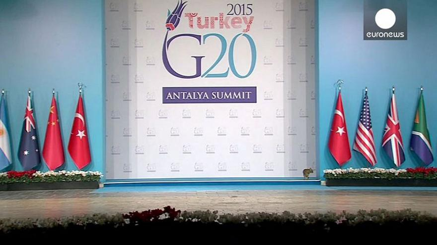 What if the G20 was run by cats?