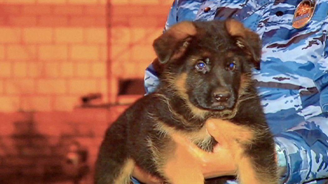 Rusia regala a Francia un cachorro para sustituir a Diesel, la perra policía muerta durante la operación antiterrorista