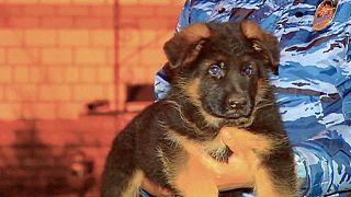 روسیه به نشانه همبستگی در پی حملات پاریس، توله سگی را به فرانسه اهدا می کند