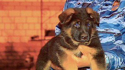 Un cucciolo in segno di solidarietà con la Francia. Prenderà il posto di Diesel, morta a St. Denis